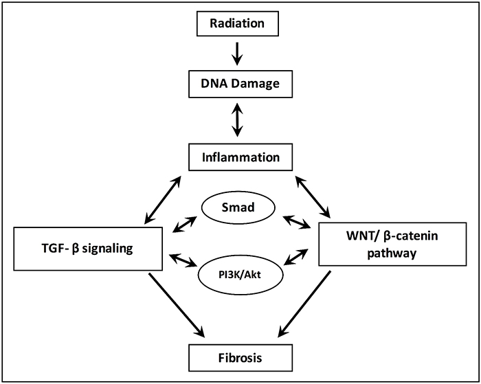 Processes for the development and progression of radiation-induced fibrosis.