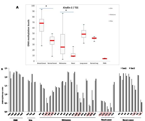 Kindlin-3 gene regulation in human tumors A.