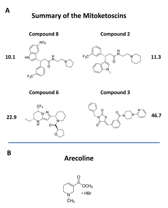 Chemical structures of novel OXCT1 and ACAT1 inhibitors.
