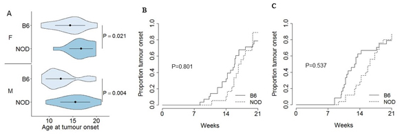 Delayed onset, but normal incidence, of pancreatic cancer on the NOD genetic background.