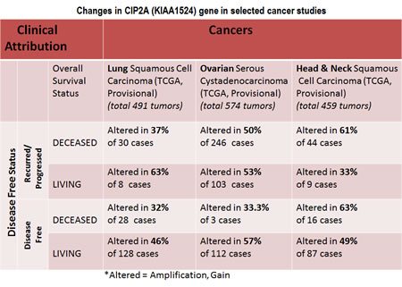 Chart showing changes in CIP2A (KIAA1524) gene in selected cancer studies including lung squamous cell carcinoma, ovarian serous cystadenocarcinoma and Head and Neck squamous cell carcinoma in the context of clinical attributions: A custom case set was build for the number of matching cases of lung squamous cell carcinoma using c-BioPortal (TCGA , Provisional; Lung Squamous Cell Carcinoma data set containing 489 samples; raw data at the NCI).