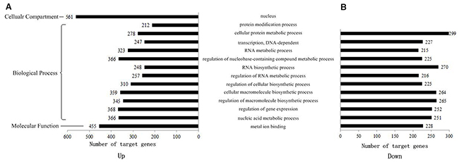 GO distribution of target genes in up- and down-regulated groups.