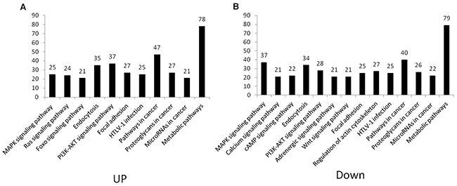Pathway distribution of target genes in up- and down-regulated groups.