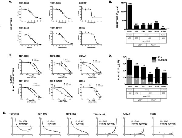 PLX4720 and dasatinib synergistically reduce cellular proliferation in mouse and human PTC and ATC cell lines.