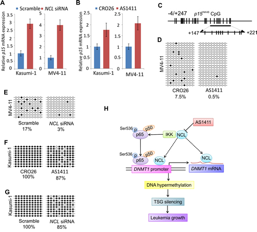 NCL inactivation contributes to the restoration of