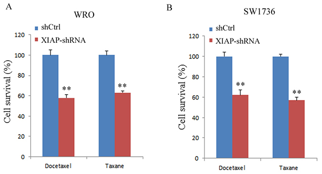 XIAP depletion enhanced chemosensitivity of WRO and SW1736 cell lines to docetaxel or taxane.
