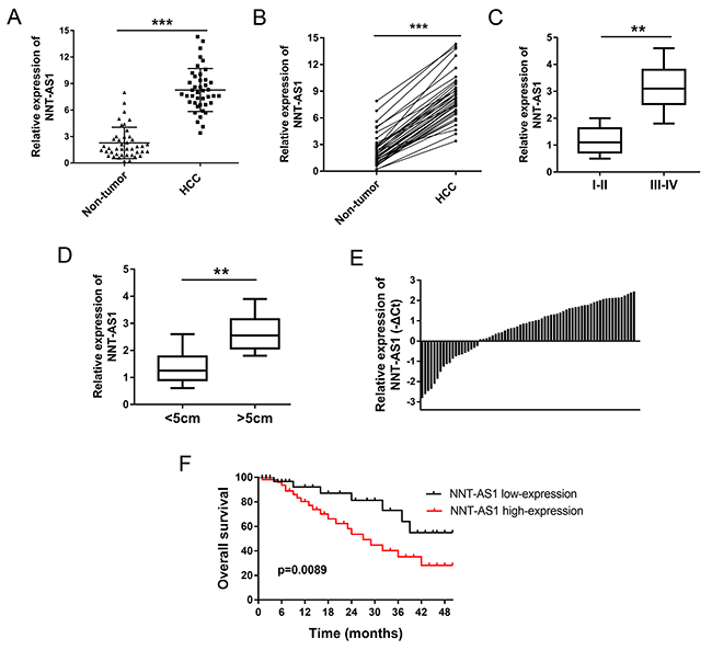 NNT-AS1 was up-regulated in HCC tissues and correlated with poor prognosis.