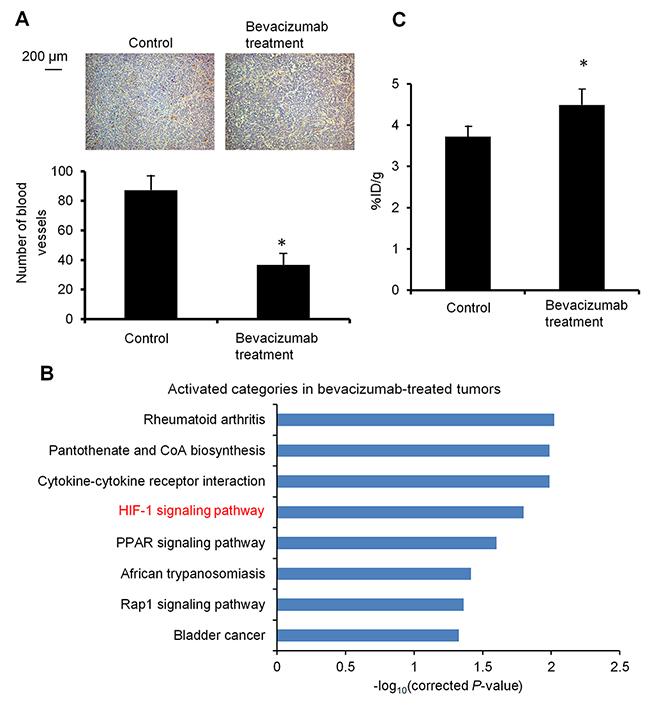 Characterization of bevacizumab-treated HT-29 tumors.