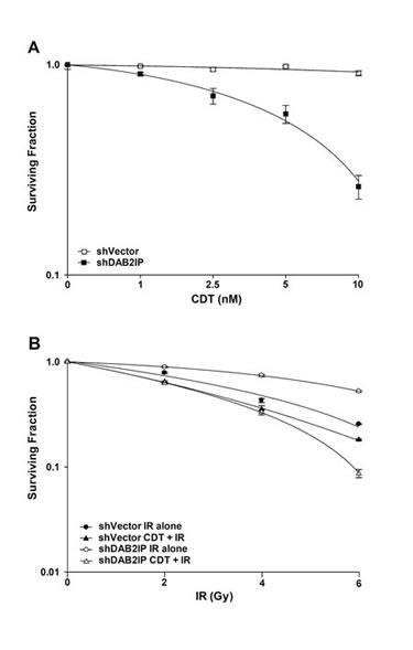 CDT enhances radio-sensitivity in DAB2IP-deficient PCa cells.