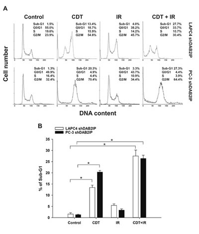 Prolonged exposure to CDT induced apoptosis in radio-resistant DAB2IP-deficient PCa cells.