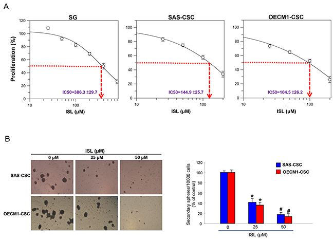 Effects of ISL on cell viability and self-renewal of OSCC-CSCs.