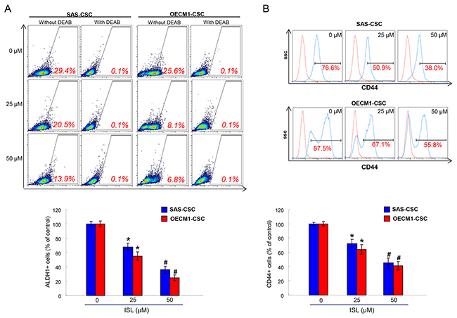 The ALDH1 enzymatic activity and CD44 positivity were reduced with ISL treatment.