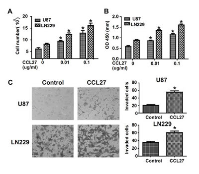 CCR10 activation promote proliferation and invasion