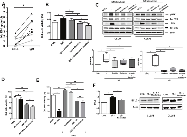 Macitentan blocks BCR signaling and promotes apoptosis in combination with ibrutinib and ABT-199 in CLL cells.