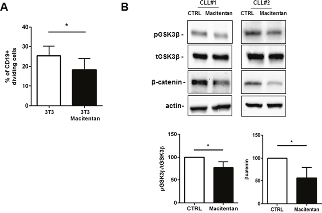 Macitentan affects CLL proliferation mediated by contact with stromal cells.