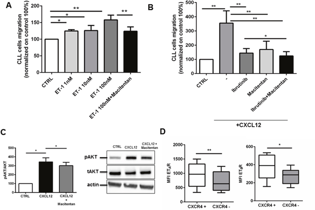 Macitentan affects CLL cell chemotaxis towards ET-1 and CXCL12.