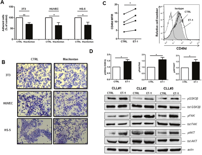 Macitentan inhibits CLL cell adhesion to endothelial and stromal cells.