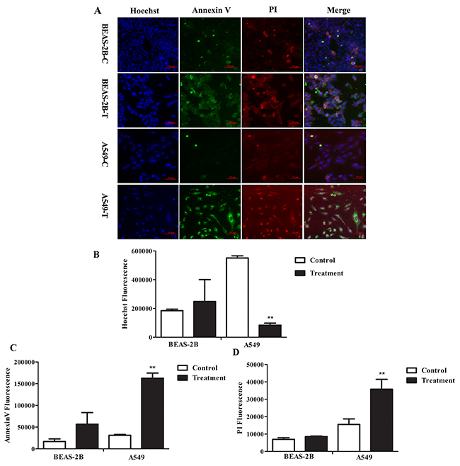 The effects of FMG on cell apoptosis.
