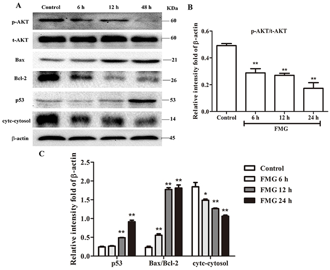 The effects of FMG on PTEN signaling pathway in A549 cells.