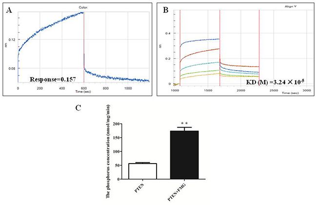 The FMG interaction with PTEN protein was analyzed by Octet RED (ForteBio).