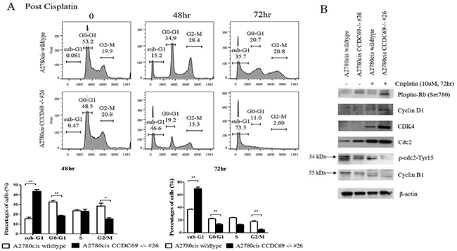 CCDC69 depletion abolished G1 and G2/M arrest after cisplatin treatment.