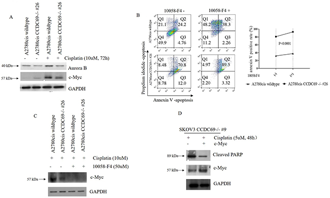 Depletion of CCDC69 enhanced cisplatin-induced apoptosis in ovarian cancer are regulated by c-Myc.