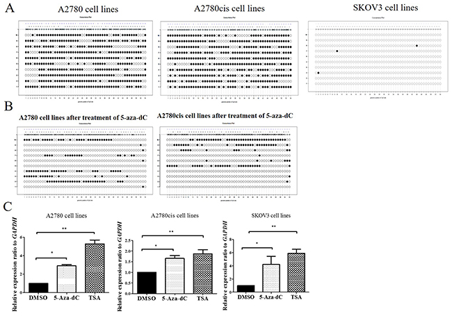 DNA methylation analysis of promoter regions of CCDC69 in ovarian cancer cell lines.