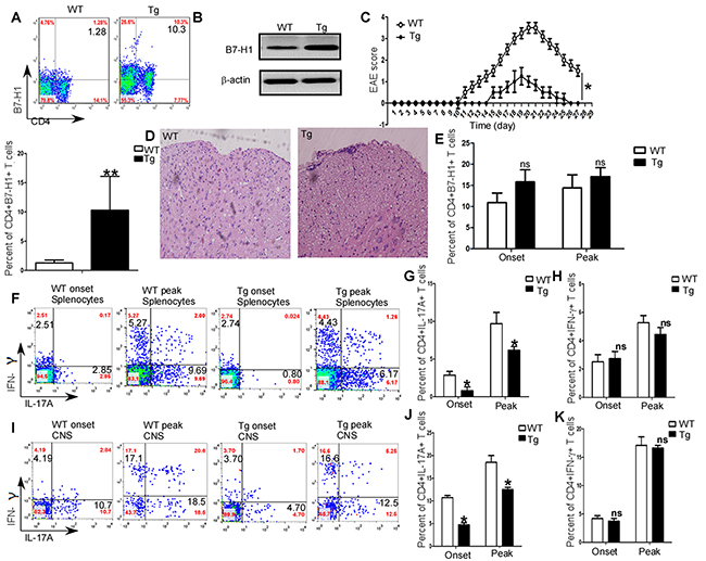 Regulation of EAE and generation of Th1/Th17 in vivo by B7-H1.