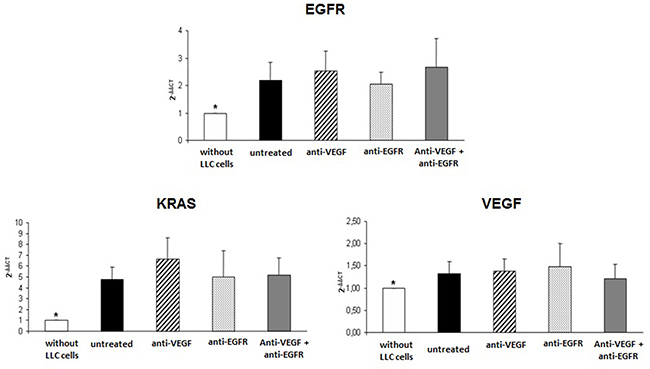 Gene expression of EGFR, KRAS and VEGF in tumor of mice injected with LLC cells treated with anti-VEGF and/or anti-EGFR and untreated.