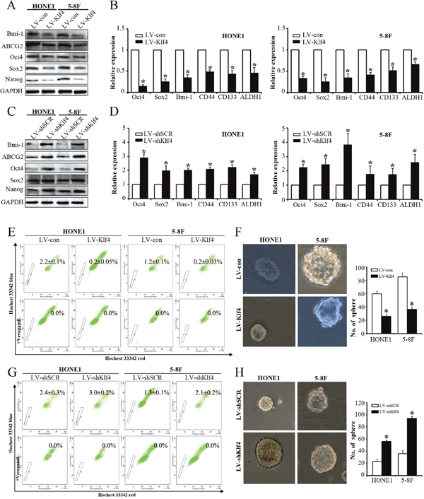 Klf4 negatively modulated the stemness of NPC cells.