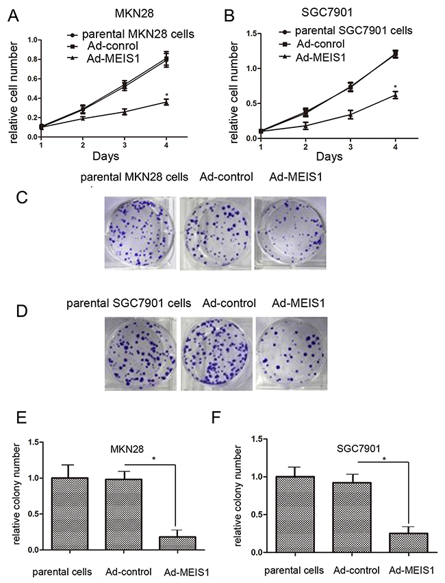 MEIS1 attenuates GC cell proliferation or survival.