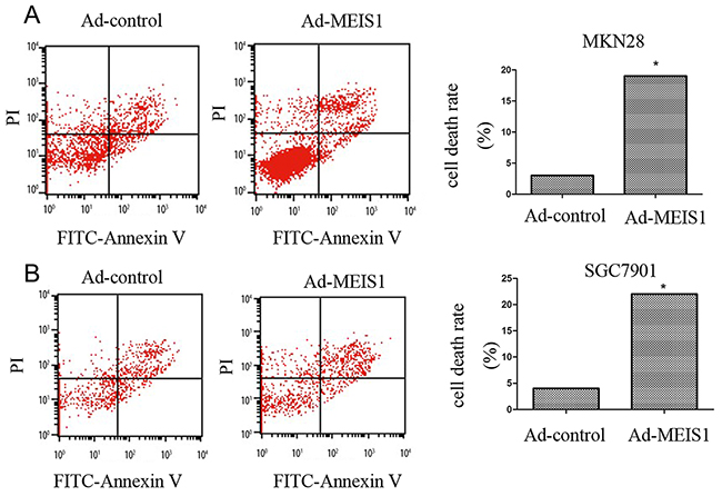 MEIS1 induces non-apoptotic cell death of GC cells.