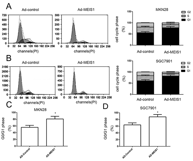 MEIS1 induces the cell cycle arrest at G1/S in GC cells.