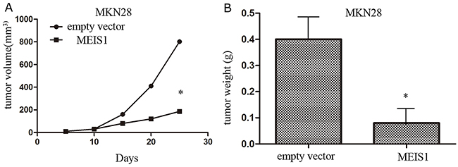 MEIS1 inhibits in vivo growth of MKN28 cells.