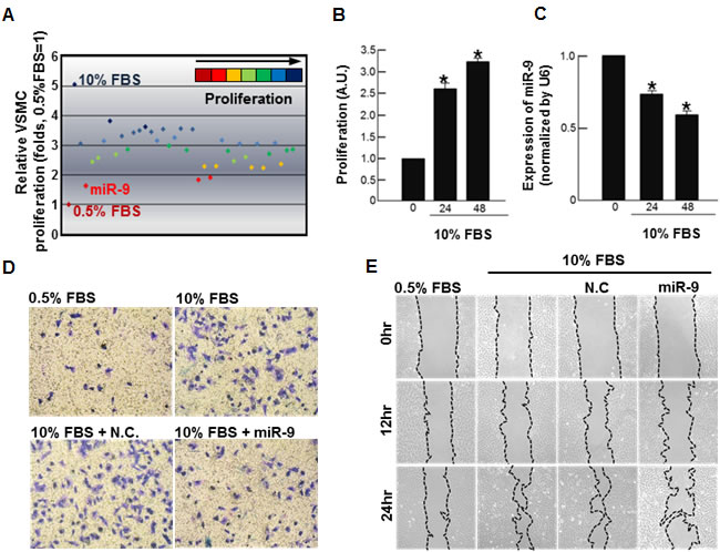 Screening of miRNA that inhibits VSMC proliferation.