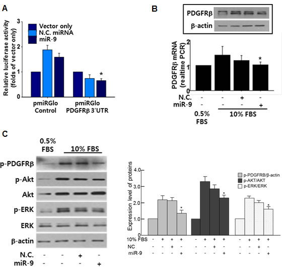 miR-9 directly targets PDGFR.