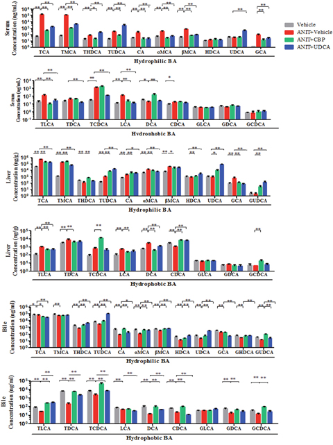The influence of CBP on hydrophilic and hydrophobic BAs detected by UPLC-MS/MS in mice with intrahepatic cholestasis.