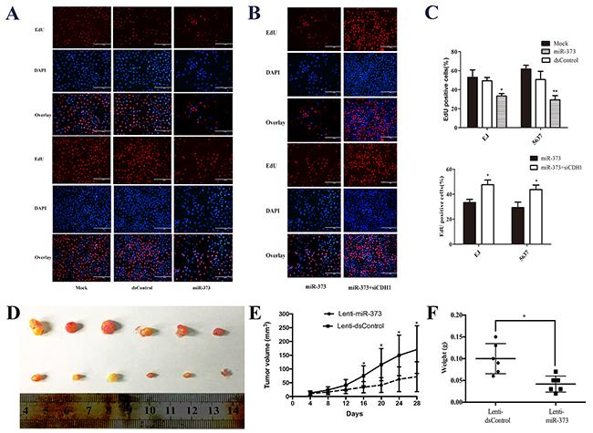 MiR-373 inhibited BCa cells proliferation in vitro and in vivo.