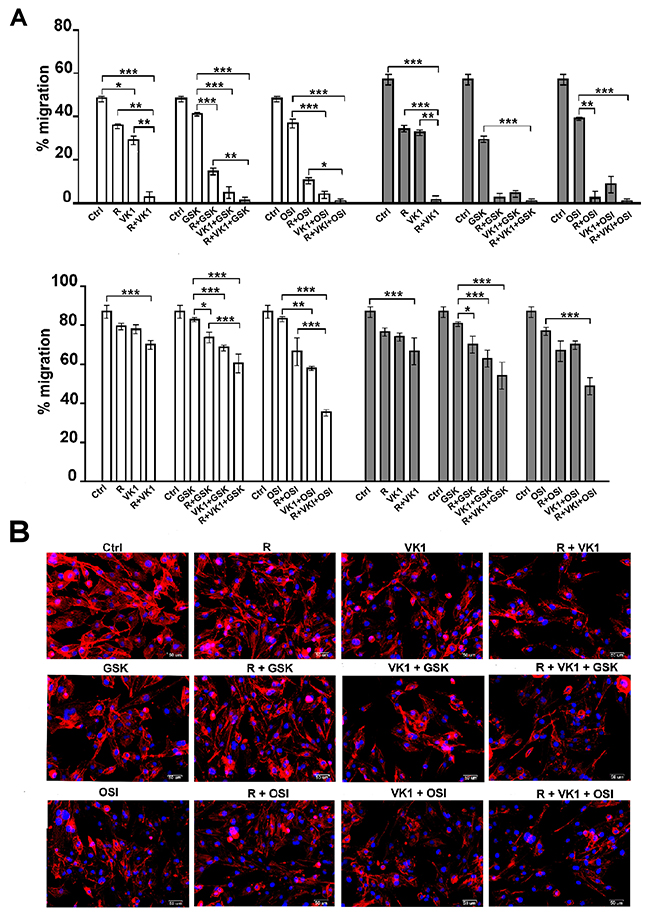 GSK1838705A and OSI-906 enhance the inhibitory effects of Regorafenib and/or VK1 on depolymerization of actin cytoskeleton and cell migration.