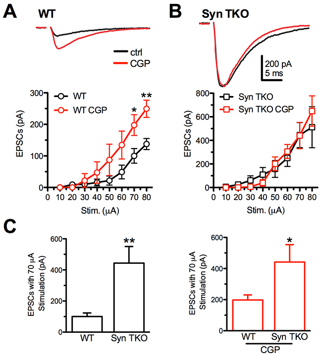 GABABR blockade with CGP55845 modulates evoked eEPSCs at Schaffer collaterals/CA1 pyramidal neuron synapses of WT, but not TKO, hippocampal slices.