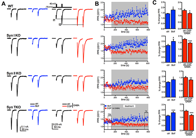 Exogenous activation of GABAB receptors similarly affects short-term plasticity of glutamatergic transmission in WT, Syn I KO, Syn II KO and Syn TKO hippocampal autapses.