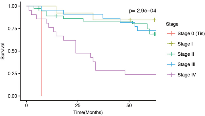 Kaplan-Meier 5-year survial curves for the current patient cohort separated by disease stage at diagnosis.