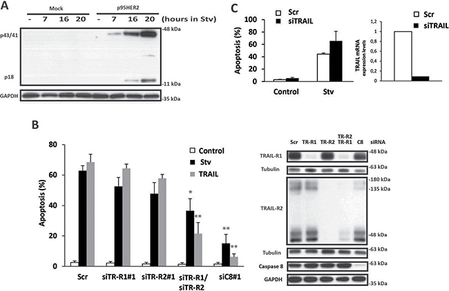 Role of the extrinsic pathway of apoptosis in metabolic stress-induced cell death.