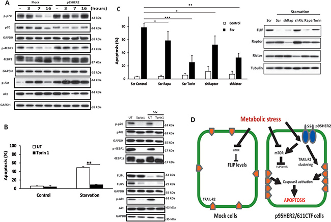 Role of mTOR complexes in apoptosis induced by metabolic stress.
