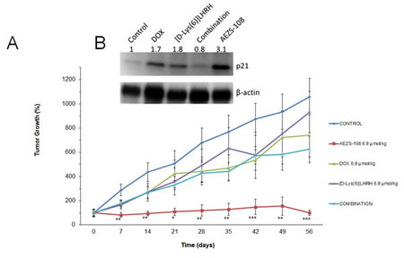 Treatment with cytotoxic luteinizing hormone-releasing hormone (LHRH) analog, AEZS-108, significantly inhibited the growth of DU-145 castration-resistant prostate cancer xenografted into nude mice and upregulated the protein levels of p21 WAF1/Cip1.