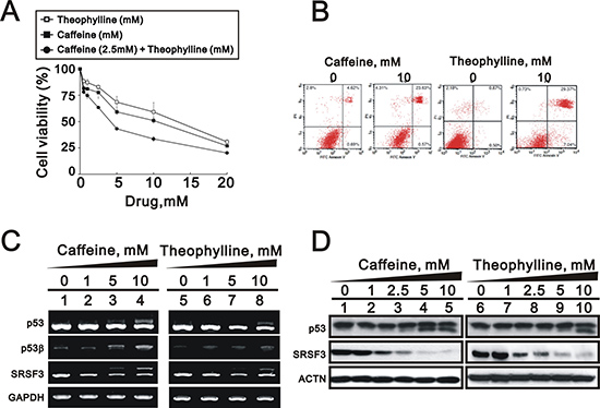 Theophylline induced cell death and apoptosis in MCF-7 cells.