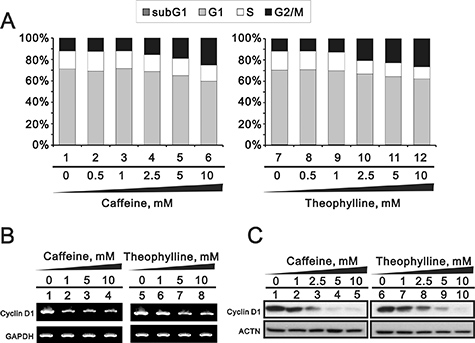 Theophylline and caffeine caused the G2/M arrest.