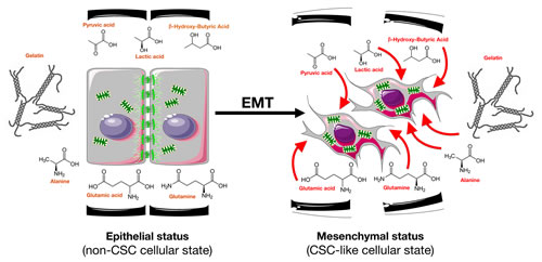The nutritional phenotype of EMT-induced CS-like cellular states.