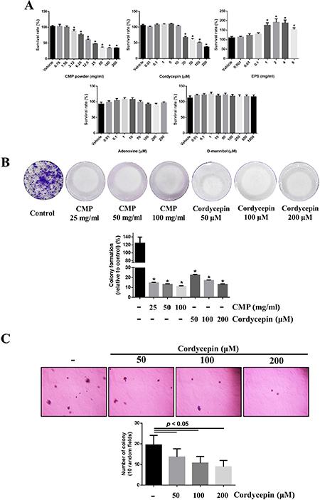 Both CMP and cordycepin suppressed proliferation of 4NAOC-1 cells.