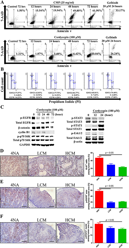 Both CMP and cordycepin inhibited mitosis and EGFR signaling.